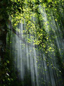 Eltete TPM Ekologia las